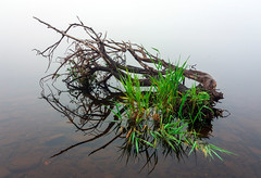 Photo of Reflected fallen branches Castle Semple Loch, Lochwinnoch, Renfrewshire, Scotland, UK