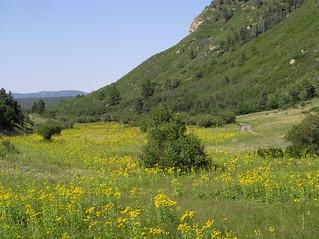 Tuck Canyon