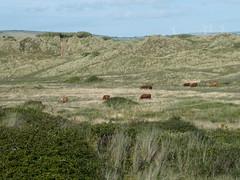 Photo of Cattle-grazed
