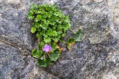 202109 Flower & Rock