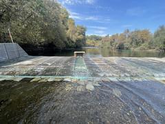 Weir downstream passage and trap