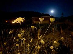 Flor de noche..
