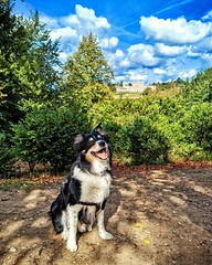 Photo of Barney at Cliveden