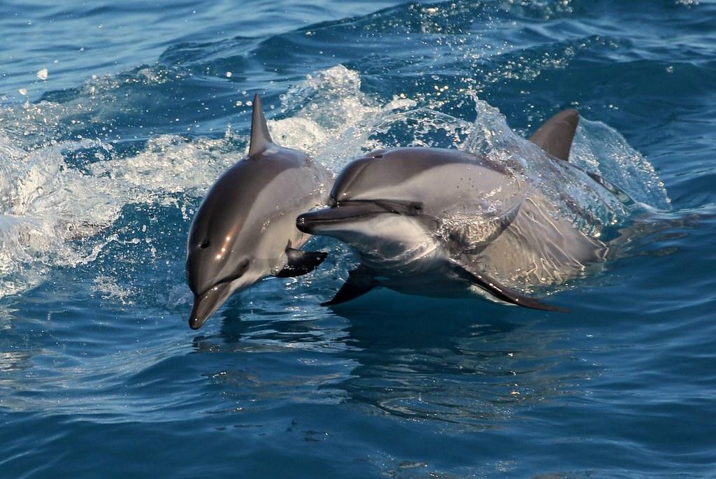 (圖3)9月27日中午12點就能用777元體驗在花蓮出海跟著導覽員尋覓可愛鯨豚(含接送方案)