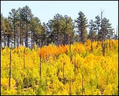 September 22, 2021 Signs of fall in Teller County. (Bill Hutchinson)