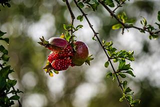 Fruit season.
