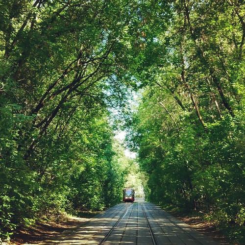 Tram in trees
