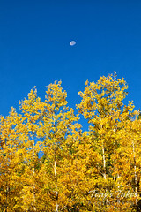 September 25, 2021 - Fall colors in RMNP. (Tony's Takes)
