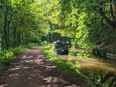 Shady canal path
