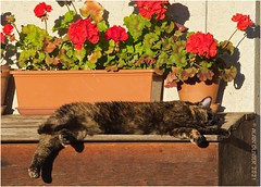 Le Chat dans toute sa splendeur