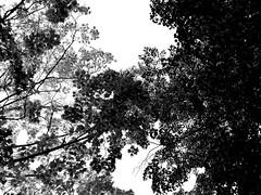 75 - Canopy (Series 6.75)