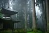 岩湧寺 多宝塔と杉木立