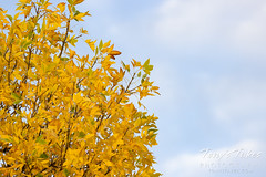 October 9, 2021 - Fall colors in Adams County. (Tony's Takes)