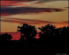 October 8, 2021 - Sunrise silhouettes. (Bill Hutchinson)