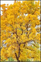 October 8, 2021 - Fall colors in Adams County. (Bill Hutchinson)