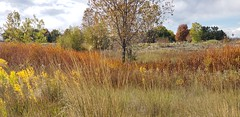 October 9, 2021 - Hints of fall in Eastlake. (Alisa H)