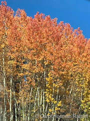 October 11, 2021 - Beautiful fall colors. (Carol Hosman Ratcliff)