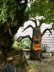 285/365: Tree Monster