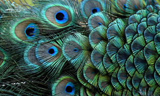 Just some Feathers