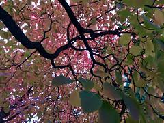 286/365: Under the Autumn