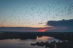 Birds   Išlaužas   Kaunas county aerial #285/365