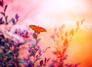 Fleeting as a butterfly
