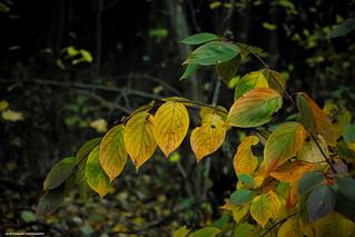 autumn ( Explored 16/10/2021)