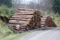 Highland logging