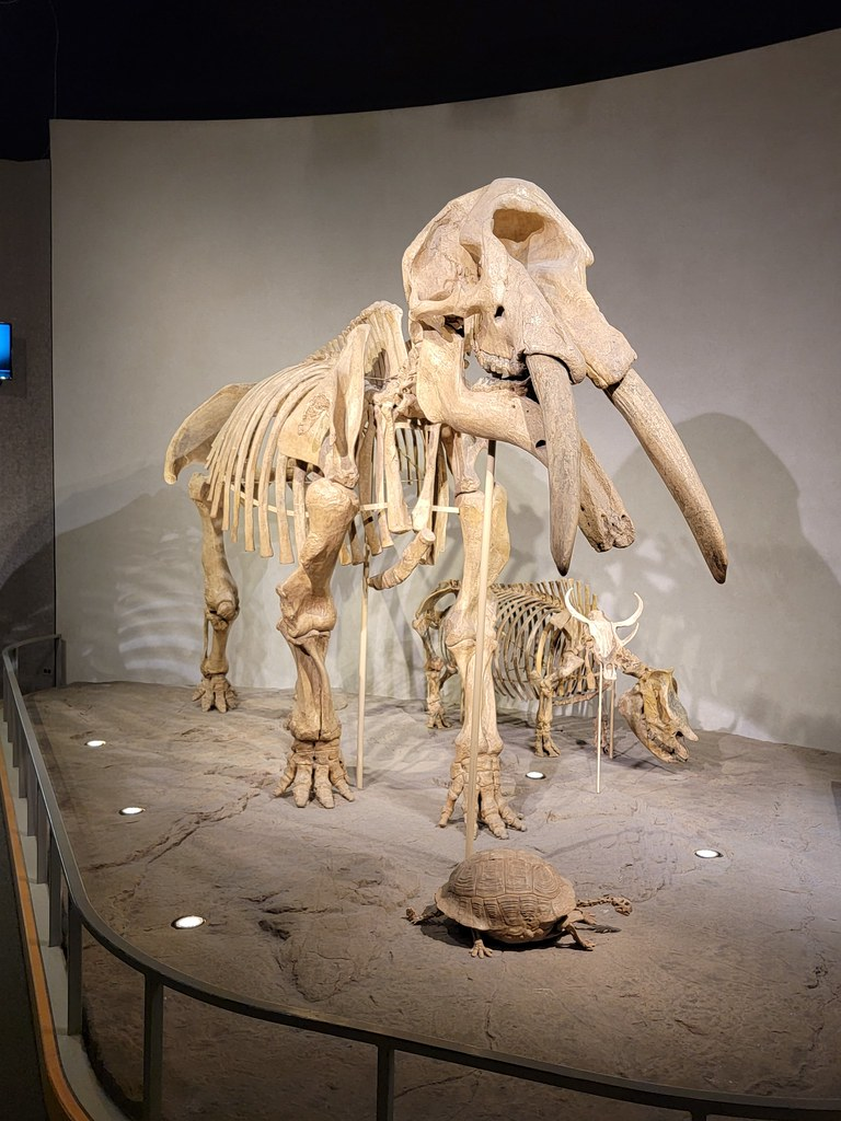 Mastodon images