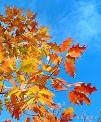 October 24, 2021 - Brilliant fall colors. (Bill Hutchinson)