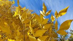 October 24, 2021 - Fantastic fall colors. (Teddy Williams)