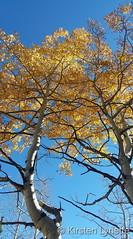 October 24, 2021 - Fall colors at Meuller State Park. (Kirsten Lynette)