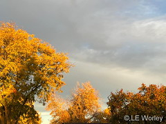October 24, 2021 - Fantastic fall colors.(LE Worley)