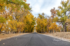 October 23, 2021 - Fall colors at the Rocky Mountain Arsenal. (Tony's Takes)