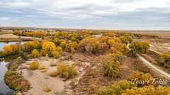 October 23, 2021 - Fall colors along the South Platte River. (Tony's Takes)