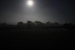 Foggy Night (Ken Meegan) Tags: trees moon tree night fullmoon foggynight cowexford saltmills 2032011