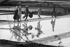 reflections, dharasana (nevil zaveri (thank you for 20+M views:)) Tags: zaveri people salt pan pans crystals bulsar pile piles seasalt woman women work worker labour monochrome blackandwhite india peopleatwork documentary story photography photographer images photos blog stockimages saltpans stick peopleandplaces photograph photographs gujrat agariya bamboo basket acacia twig branch branches thorns gujarat bw nevil nevilzaveri stock photo dharasna valsaddistrict valsad dharasana rural myfav