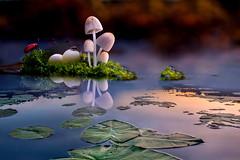 Il profondo silenzio (Zz manipulation) Tags: art ambrosioni baco manipulation zzmanipulation stagno foglie acqua funghi insetti natura