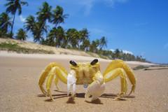 Siri 04 (Coquine!) Tags: brasil brazil beach praya siri crab searchthebest abigfave christianleyk