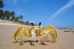 siri05 (Coquine!) Tags: brasil brazil beach praya siri crab christianleyk