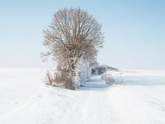 20130313_DSCN0091 (G_Albrecht) Tags: schnee winter jahreszeit landschaft sonne farben gestaltung weis deutschland nordrheinwestfalen wetter umwelt erftstadt snow season